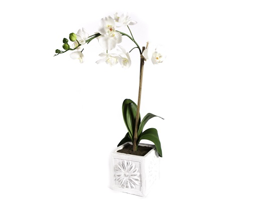 WHITE ORCHID (FLO 5)