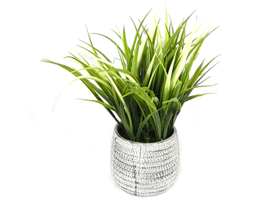 Grass Plant (FLO 36)