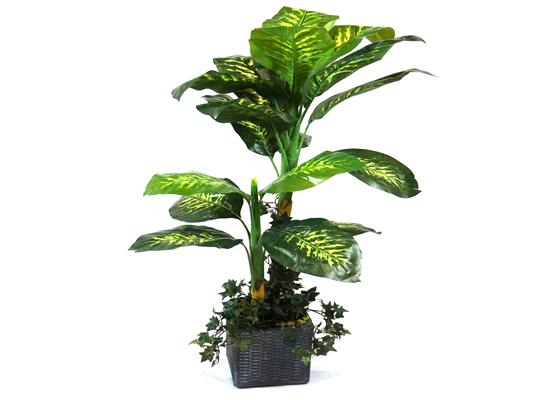 mia tall plant (flo 43)