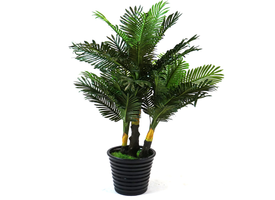 tall plant (flo 42)