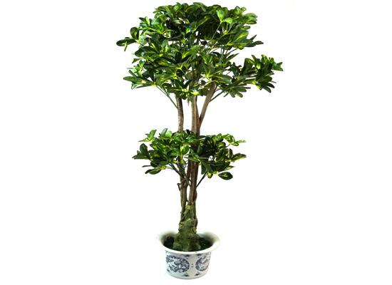 tall plant (flo 41)