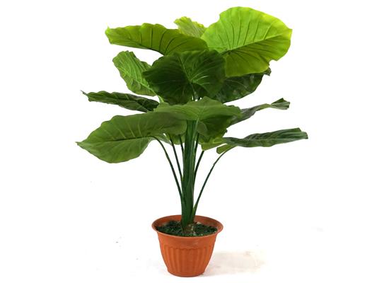 plant (flo 46)