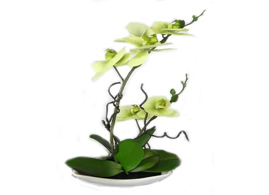 Green Orchid (FLO 48)