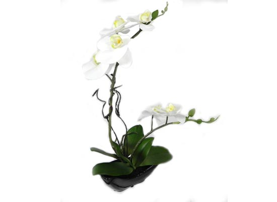 White Orchid (FLO 47)