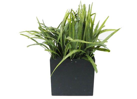 grass (flo 81)