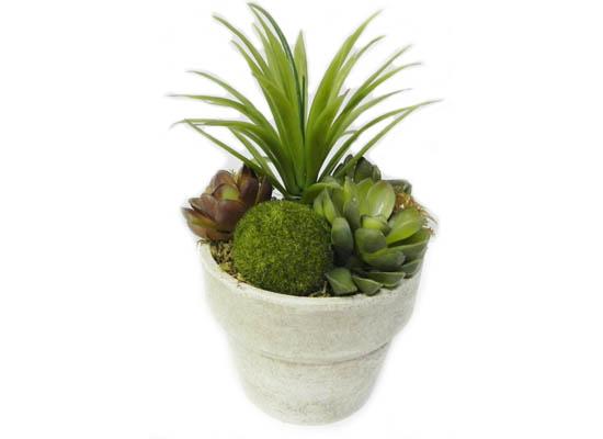 mic cactus (flo 83)