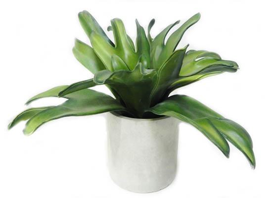 green plant (flo 85)