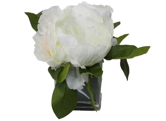 white peony (flo 73)
