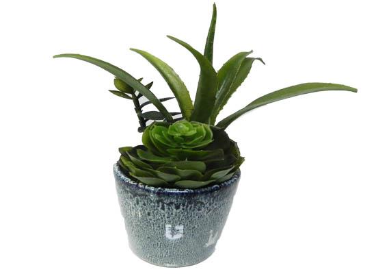small cactus (flo 75)