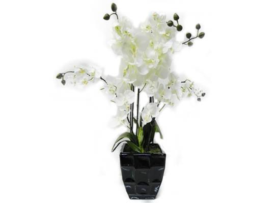 flower (flo 77)