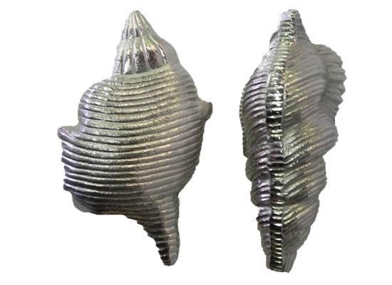 sea shell (acc 126)
