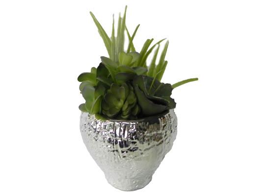 mix cactus (flo 109)