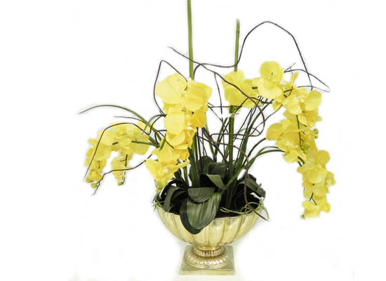 yellow orchid  (flo 99)