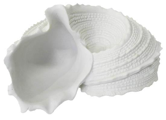 sea shell (acc 94)