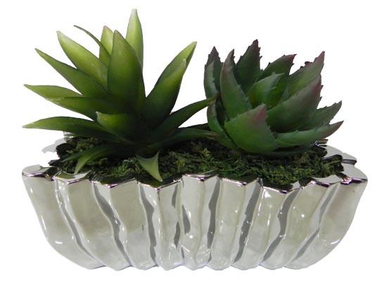 cactus (flo 101)