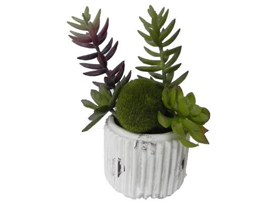 small cactus (flo 102)