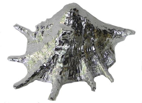 seashell (acc 113)