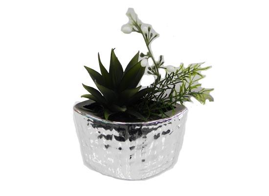 mix cactus (flo 114)