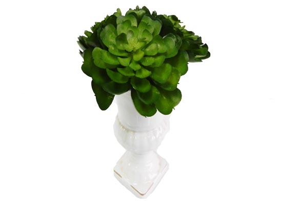 tall cactus (flo 111)