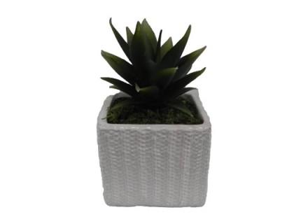 cactus (flo 113)
