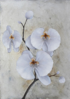 Innocent Orchid 2 (PRT 309)