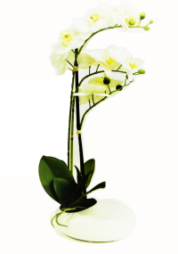 White Orchid (Flo200)