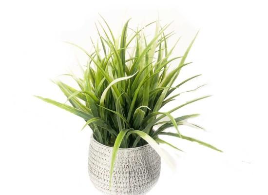 Green Plant (FLO222)