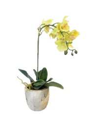 Lime Green Orchid (FLO213)