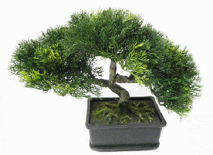 Bonsai tREE (FLO82)